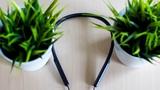 Mi Bluetooth Neckband Earphones - недорогие беспроводные наушники с aptX