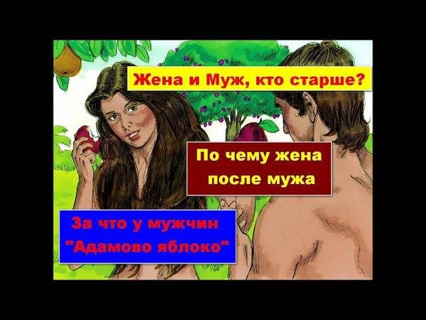 Жена и Муж, Ева и Адам. Кто старший в семье и за что?!