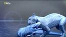 Бойцовский клуб для животных 3 сезон 7 серия Кошачья битва Animal Fight Club 2015