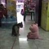 Cat Cena
