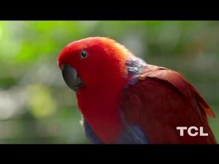 4k hdr demo 60fps wildlife video for 4k oled tv