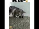 V.teme_tvBna9ljAFos3.mp4