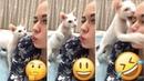 Hayvanını Rahatsız Et 🤪 🐶🐱 Funny Animals Cute Animals Animal Kingdom Musically Tik Tok