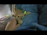 Camping with Chester A How To Guide to keep a stray cat happy.