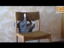 Смешные коты и кошки 2018. Видео приколы с котами и кошками 🐈 Кошки смешное видео 2018