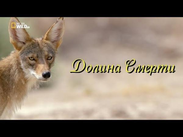 Nat Geo Wild Прекрасная Америка. Долина смерти (1080р)