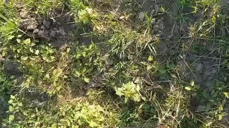 Elazigdan Dumo Erzurumlu Sarı Candar