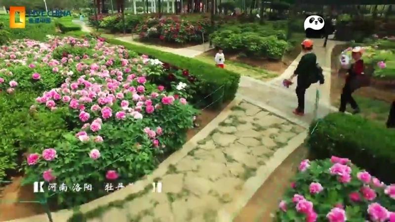 Исторический город Лоян (провинции Хэнань)