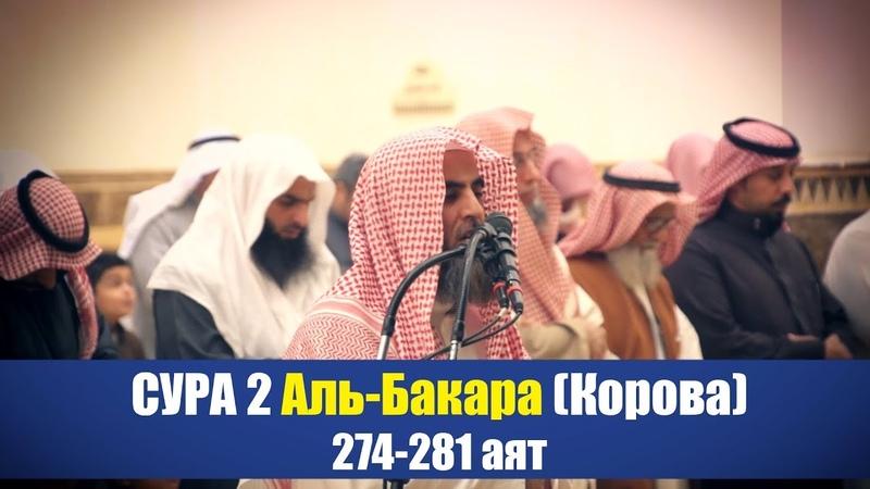 Послушай этот Коран Сура 2 Аль Бакара Корова 274 281 аят Мухаммад аль Люхайдан 2019