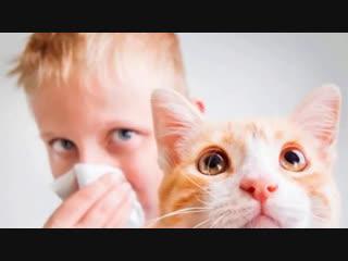 Ваше здоровье. Аллергия на домашних питомцев