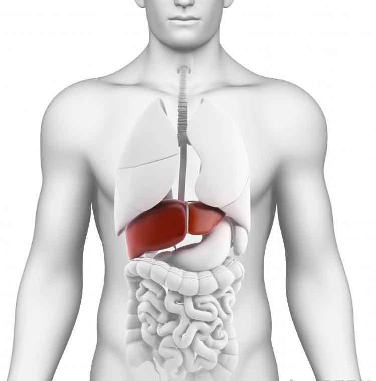 Интерфероны используются в качестве лекарств против гепатита