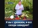Под брендом «ХОЗЯЙСТВО» уже несколько лет существует магазин профессиональных семян @semena_hozvo