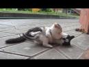 А ну-ка Давай-ка Наши котята КОШКА МУРКА И ШКОЛА КОТОВ Челлендж котенка мультики про котят Little Kittens