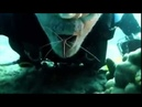 Креветка чистит зубы дайверу Настоящий симбиоз человека и водяных Прикол юмор ржач смешное видео