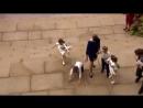 Принц Луи Кембриджский сегодня упал поднимаясь по лестнице на свадьбе принцессы Евгении