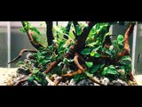 Setup Nature Aquarium Step-by-step AQUASCAPE 25.04.2018