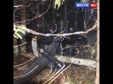 Опубликовано видео с места крушения вертолета в Костромской области