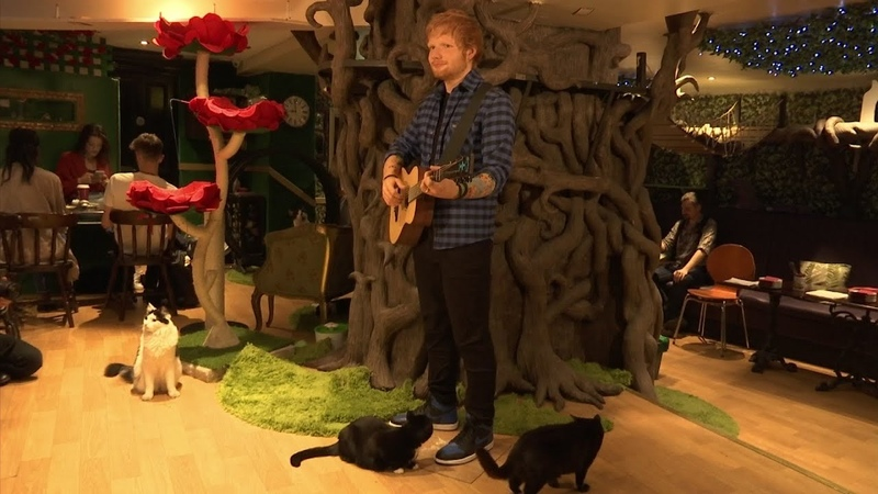 Sheeran waxwork gets purr-fect launch