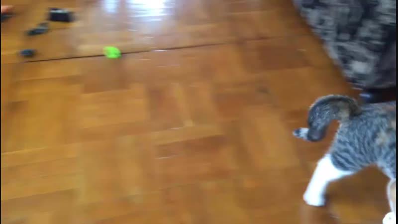 Ириска охотится