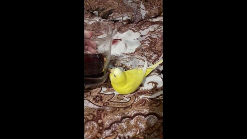 Птица алкоголик горе в семье