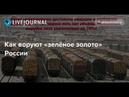 Кто стоит за воровством леса в Иркутской Области