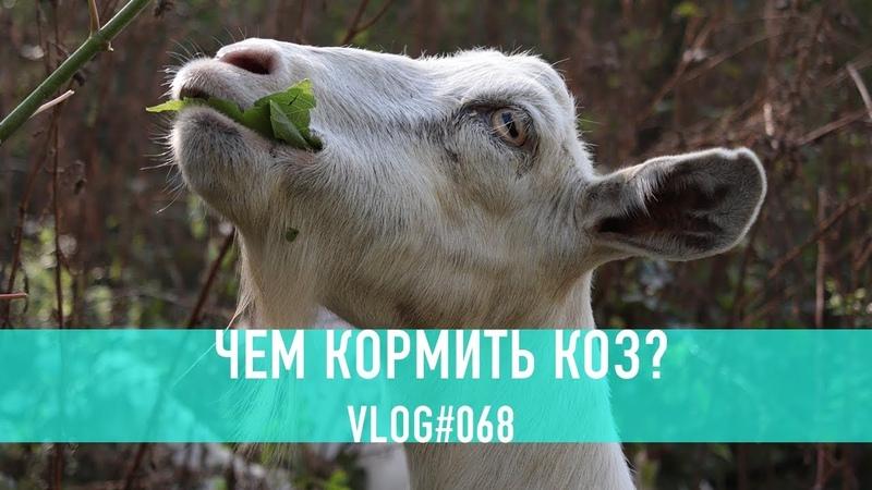 Чем кормить коз? Наш 8 летний опыт