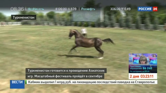 Новости на Россия 24 • Легендарная порода как готовят к состязаниям ахалтекинцев