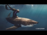 Ocean Ramsey Is the 'Little Blond Girl' Who Is Protecting Great White Sharks - The Inertia
