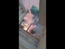 Ein Mann filmt das Feuer in Griechenland und rettet eine Katze