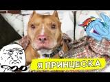 Этого пса заставляли убивать, но его спасла любовь!