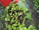 7 Vlog Наш урожай