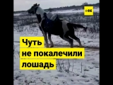 Лошадь привязали к буксующей машине ДПС