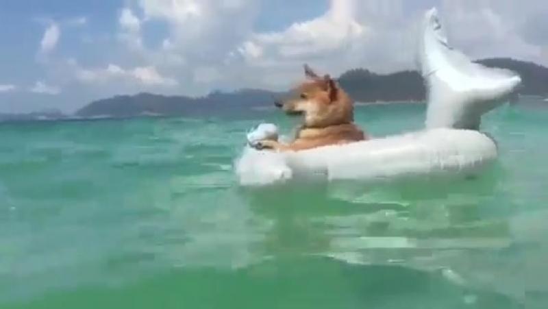 Даже пёс уже на море