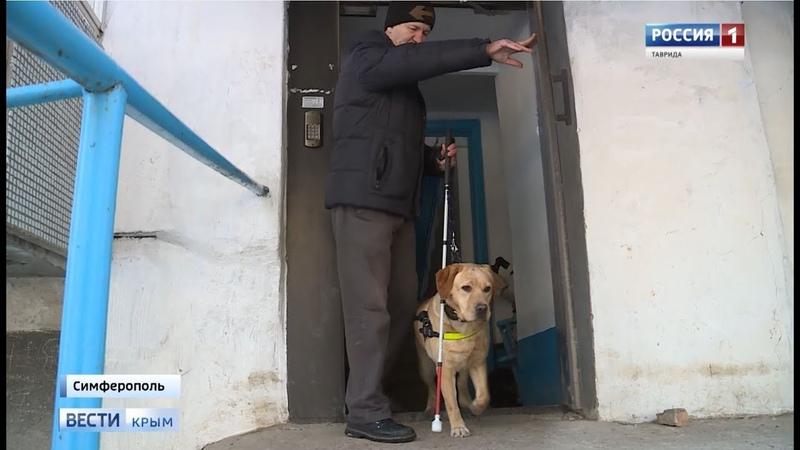 ВестиКрым рф В Крыму появилась первая дипломированная собака поводырь