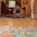 Животные on Instagram