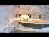 Белый мишка в зоопарке СПб