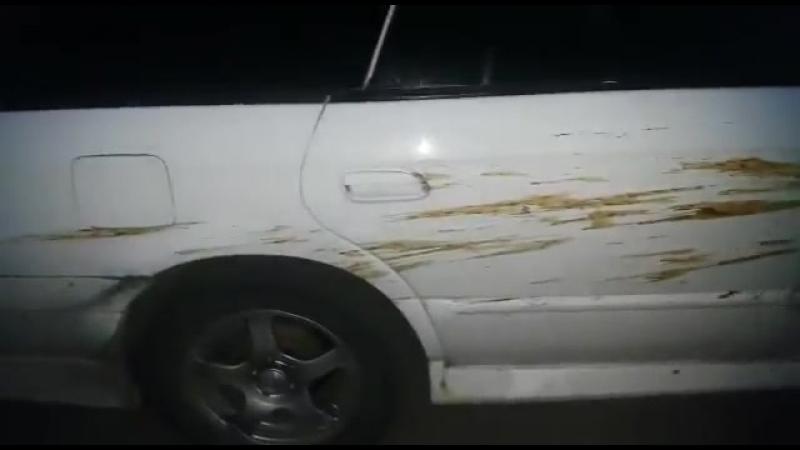 АВАРИЯ С МЕДВЕДЕМ Всю машину мне обосрал Прикольное смешное видео Приколы