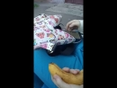 Внимание! (цензура) Злата Котик жрет банан она вас подождет (особенно Диму Лиса)