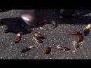 Жестокие кадры с убиением невинных животных