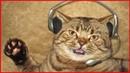 Коты поют МАКАРЕНА. Приколы с котами и кошками 2018.Смешные коты и котики