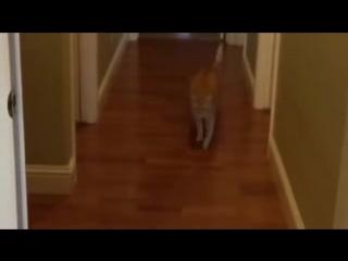 Внезапность Смешные приколы кошки_low.mp4