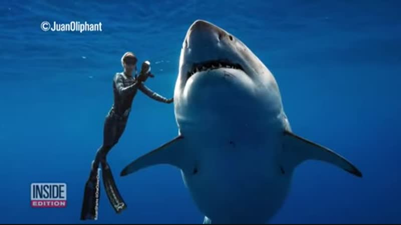 Underwater photographer swims with one of the biggest great white sharks in the world. 'Deep Blue' as it's known, Is about 50yrs