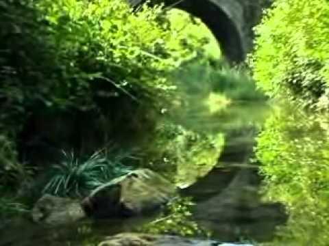 Гусеница у ручья