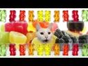 The Gummy Bear Song - Cats Version - I'm a Gummy Bear - Cats Parody