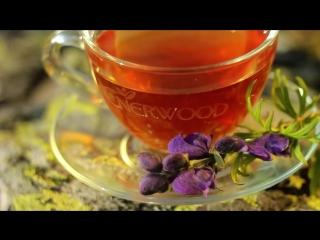 Enerwood_ чаепитие для долголетия. Все про чай, NL Products