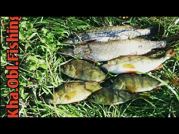 Рыбалка, Осень, ЩУКА и ОКУНЬ на вертушки ( Вращающиеся блесна)