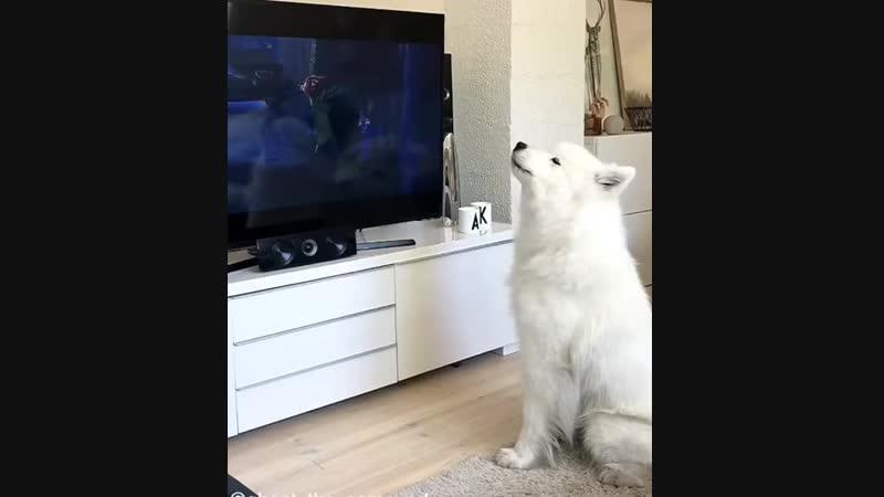 Самое время для собачьей перезагрузки