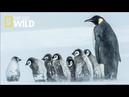 National Geographic Documentary Wild - Wild Winter HD - BBC Documentary History