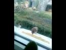 Жадный воробьишка 💪на фоне нервничает мой попугай 😉