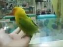 Попугай который видел sex